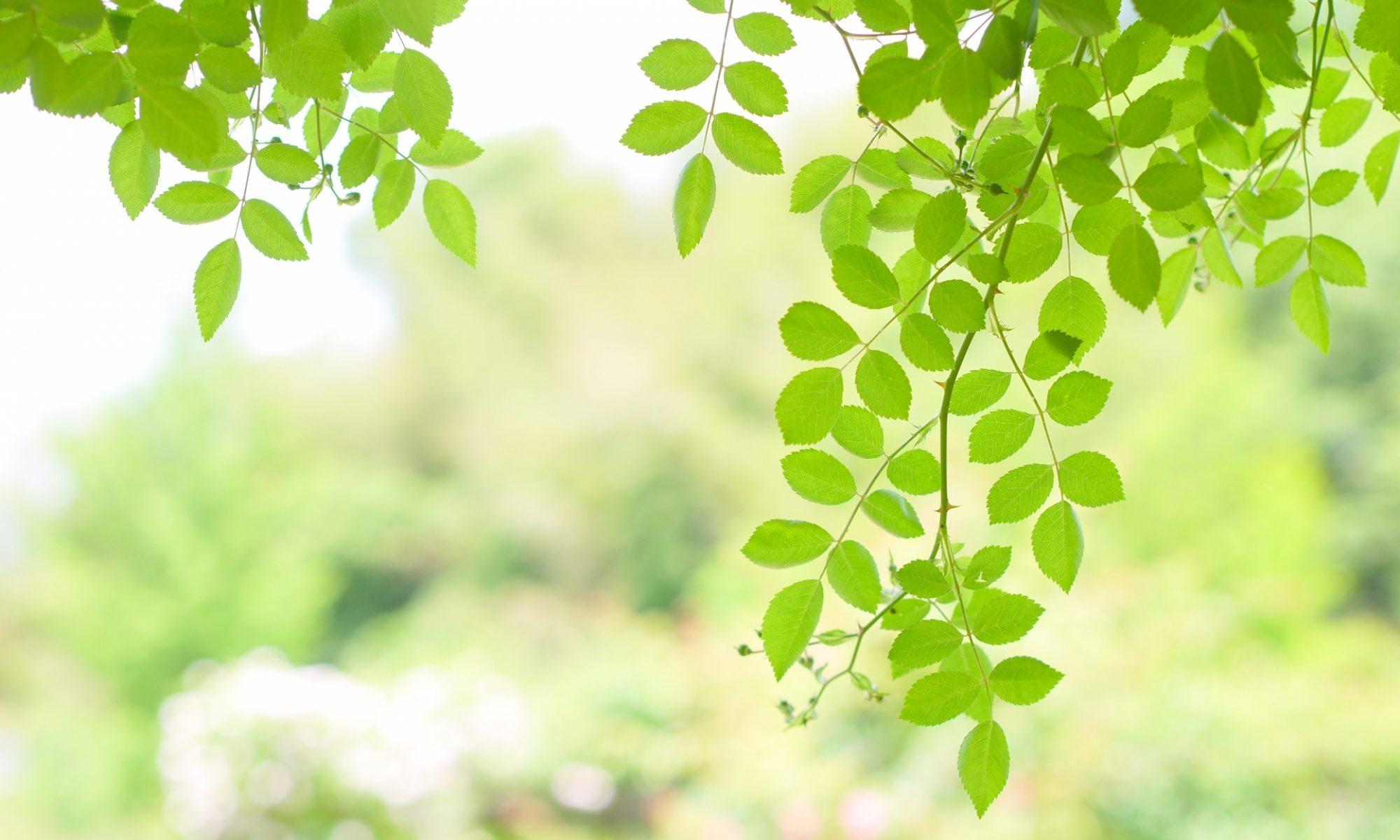 武蔵小杉の整体院ブログ